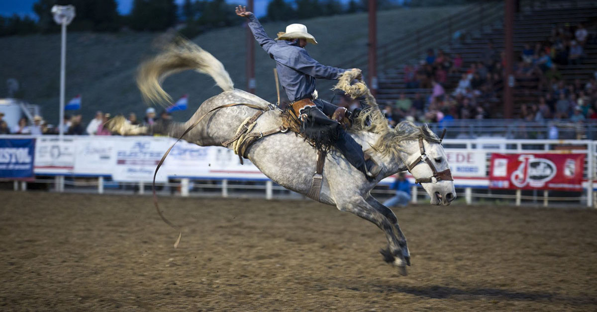 Bronc Rider in the Cody Stampede Rodeo