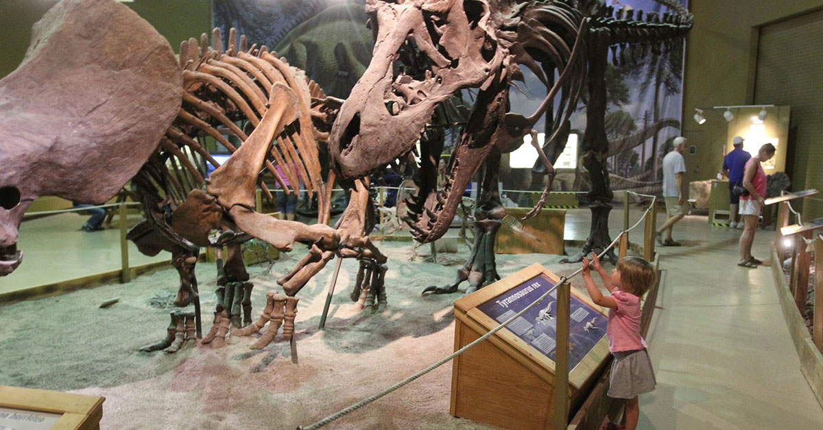 Little girl looking up at dinosaur fossils.