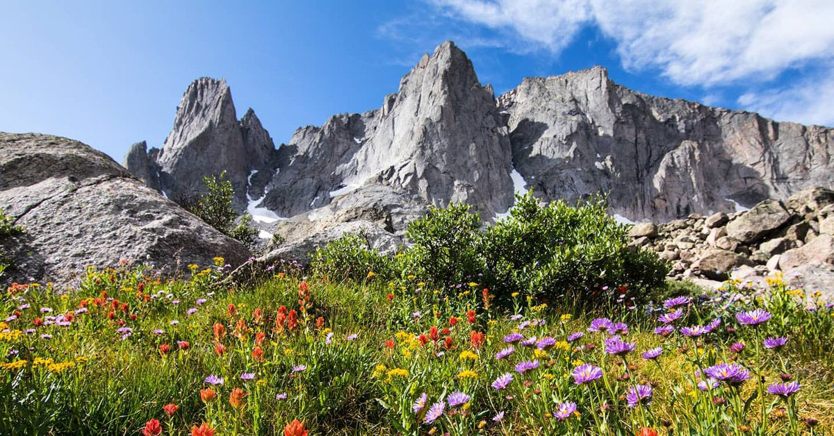 Wild flowers in front of a mountain range.