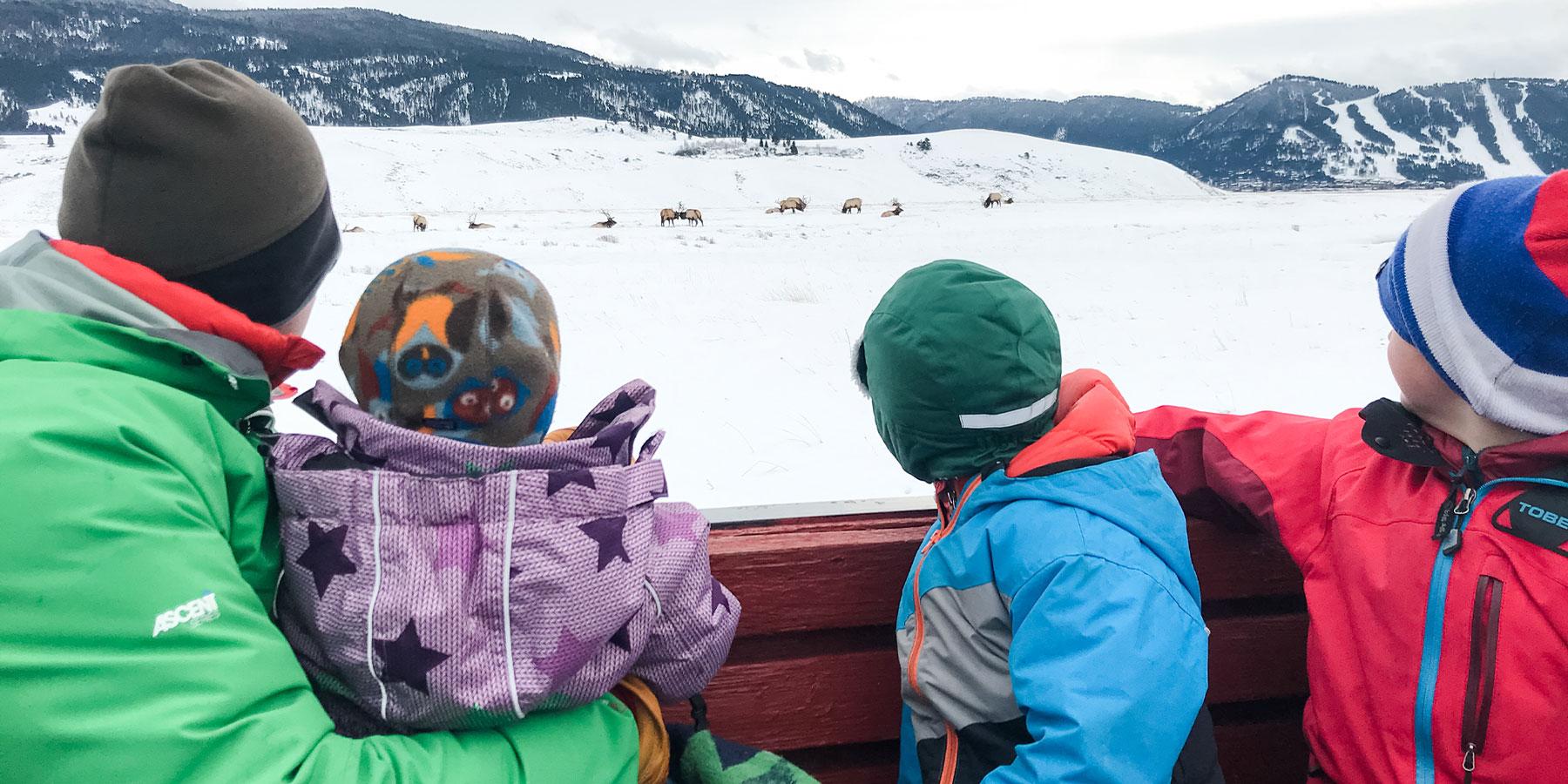 Family gazing at elk in field