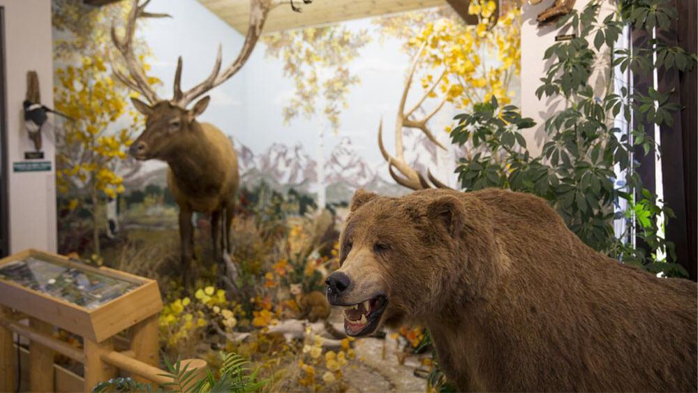 Bear River State Park wildlife display