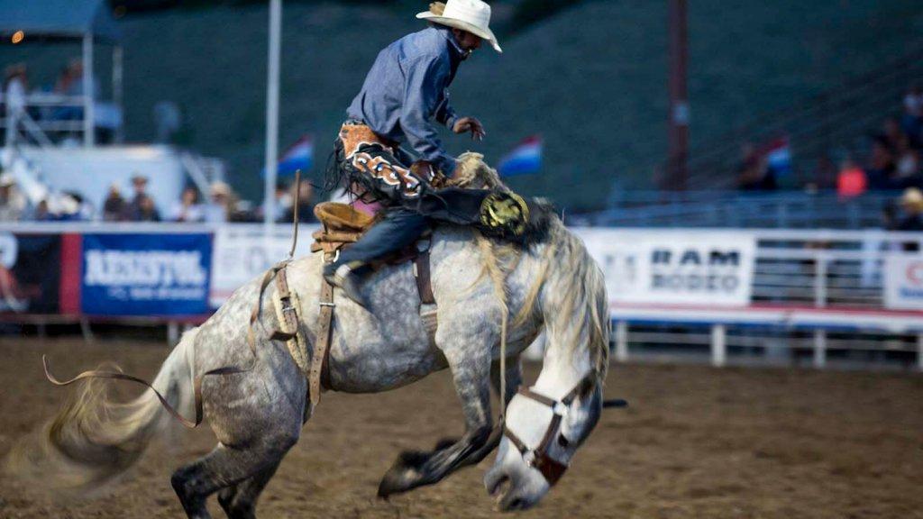 bronc rider in arena on horseback