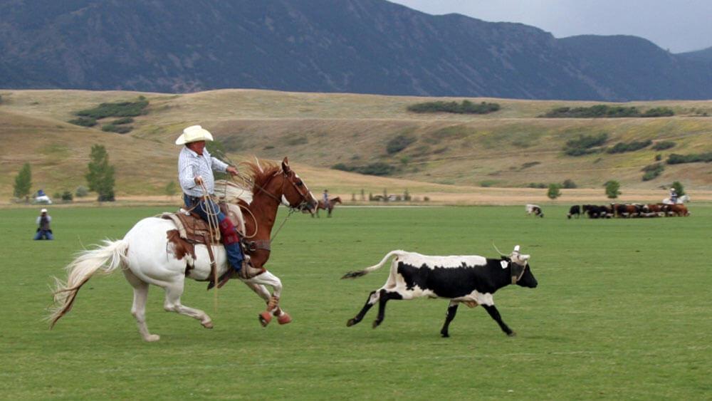 roper on horseback after calf