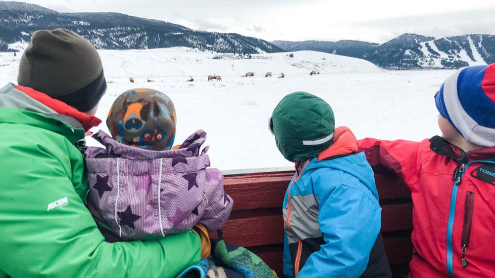 Family in sleigh observing wildlife