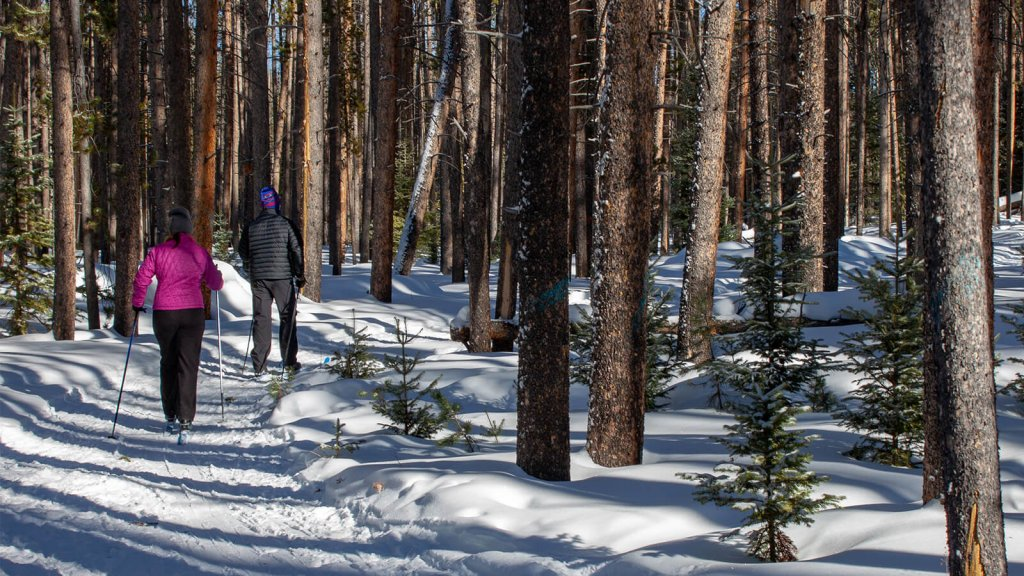 Cross-country skiiers traveling through forest