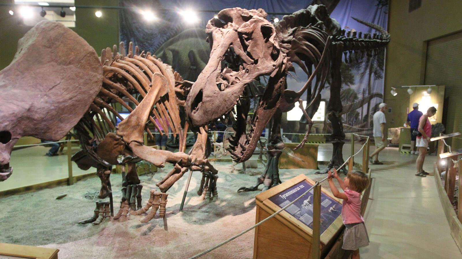 child gazing at dinosaur skeleton