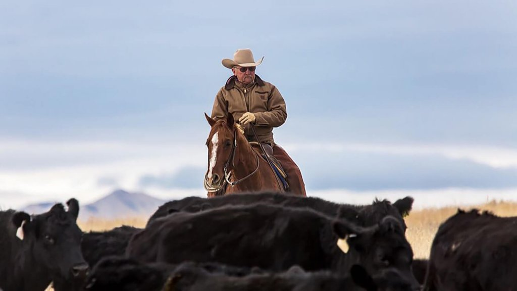 cattle driver with herd