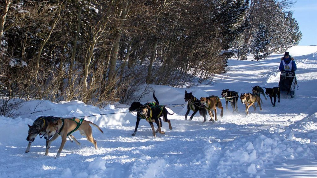 Dogs lined up pulling dogsled