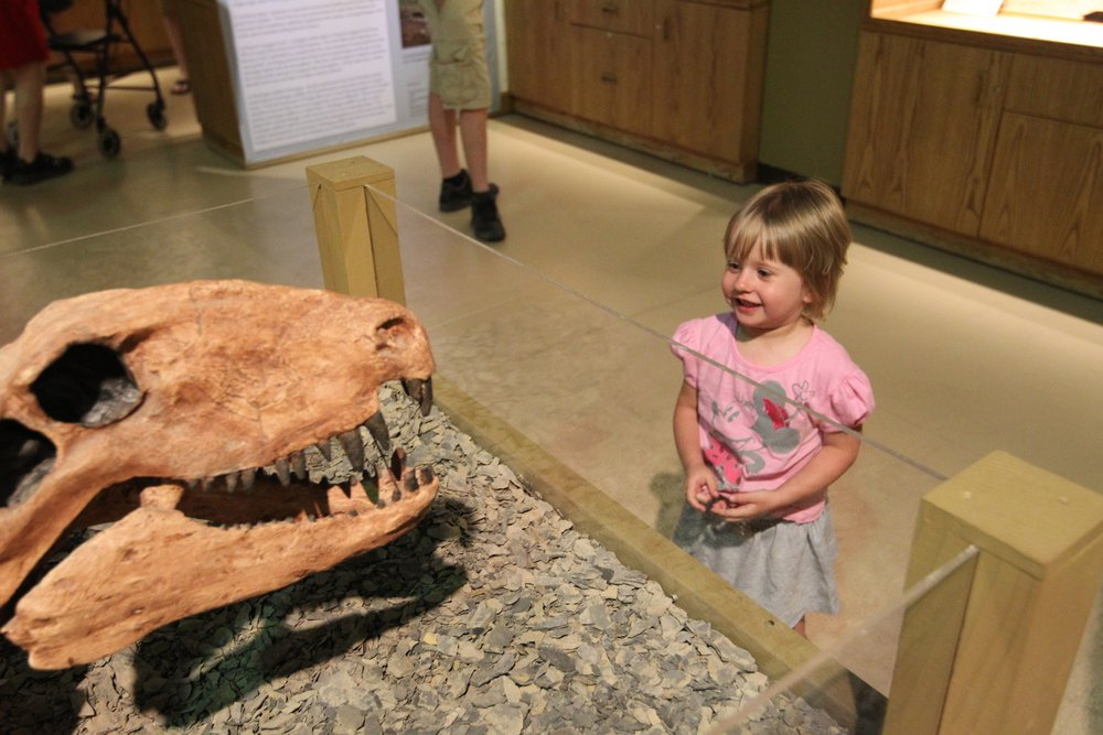 Little girl checking out a dinosaur fossil.