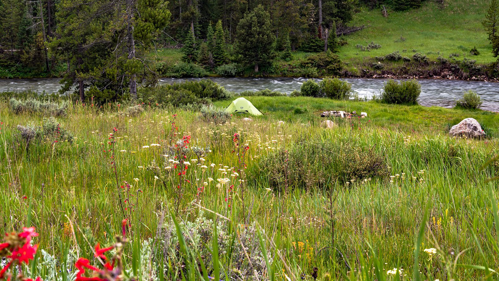 Campsite in a meadow