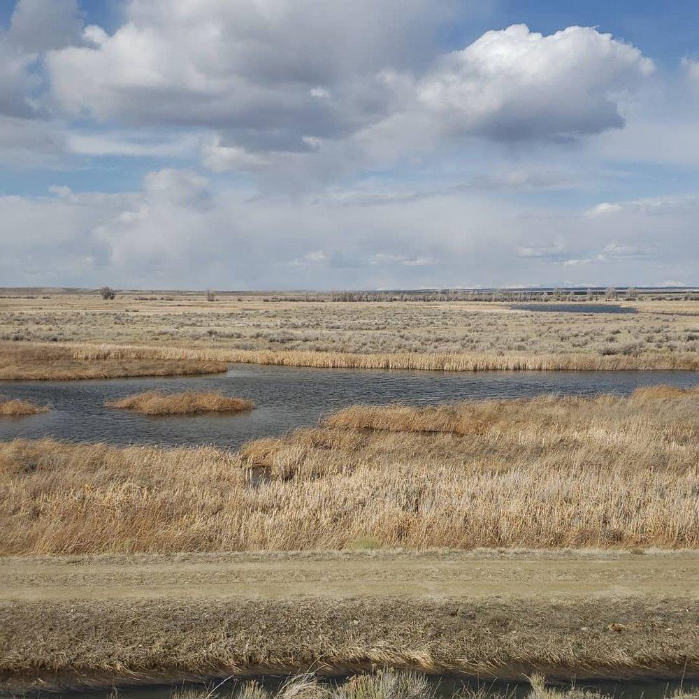 Water ways flowing through grassland