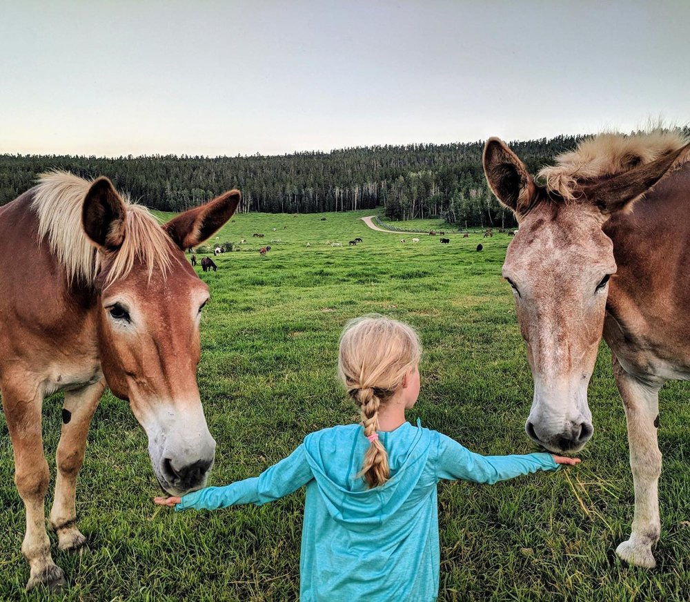 Paradise Guest Ranch-girl feeding two horses.