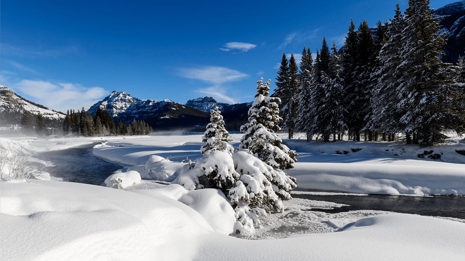 trees and river covered in snow