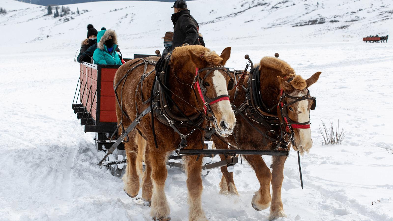 Horses pulling sleigh through the snow.