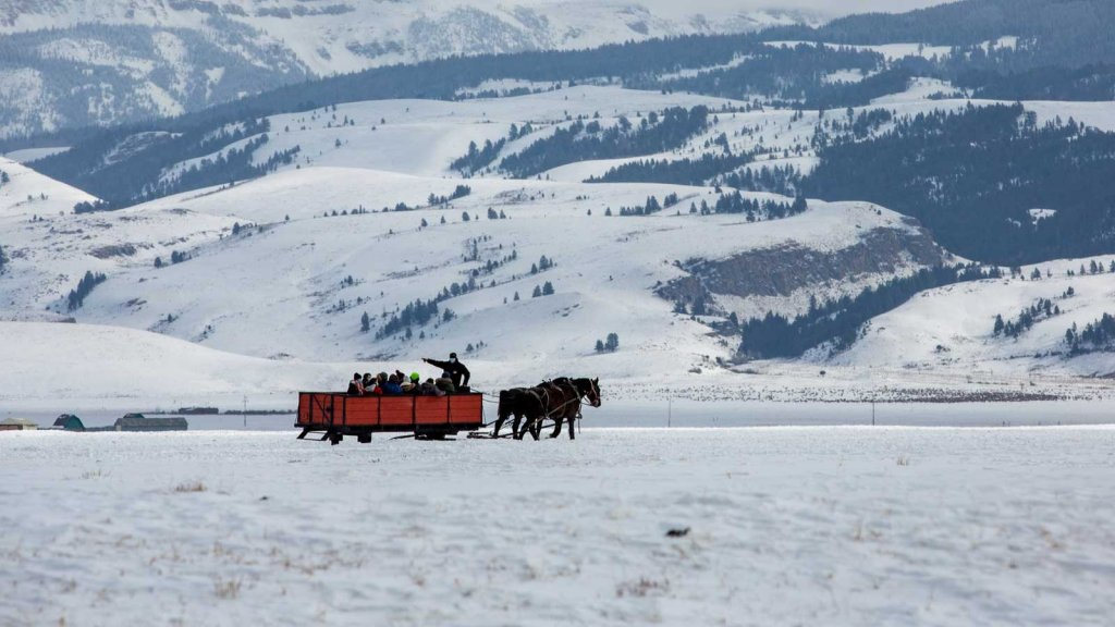 Sleigh being pulled by horses across snowy field