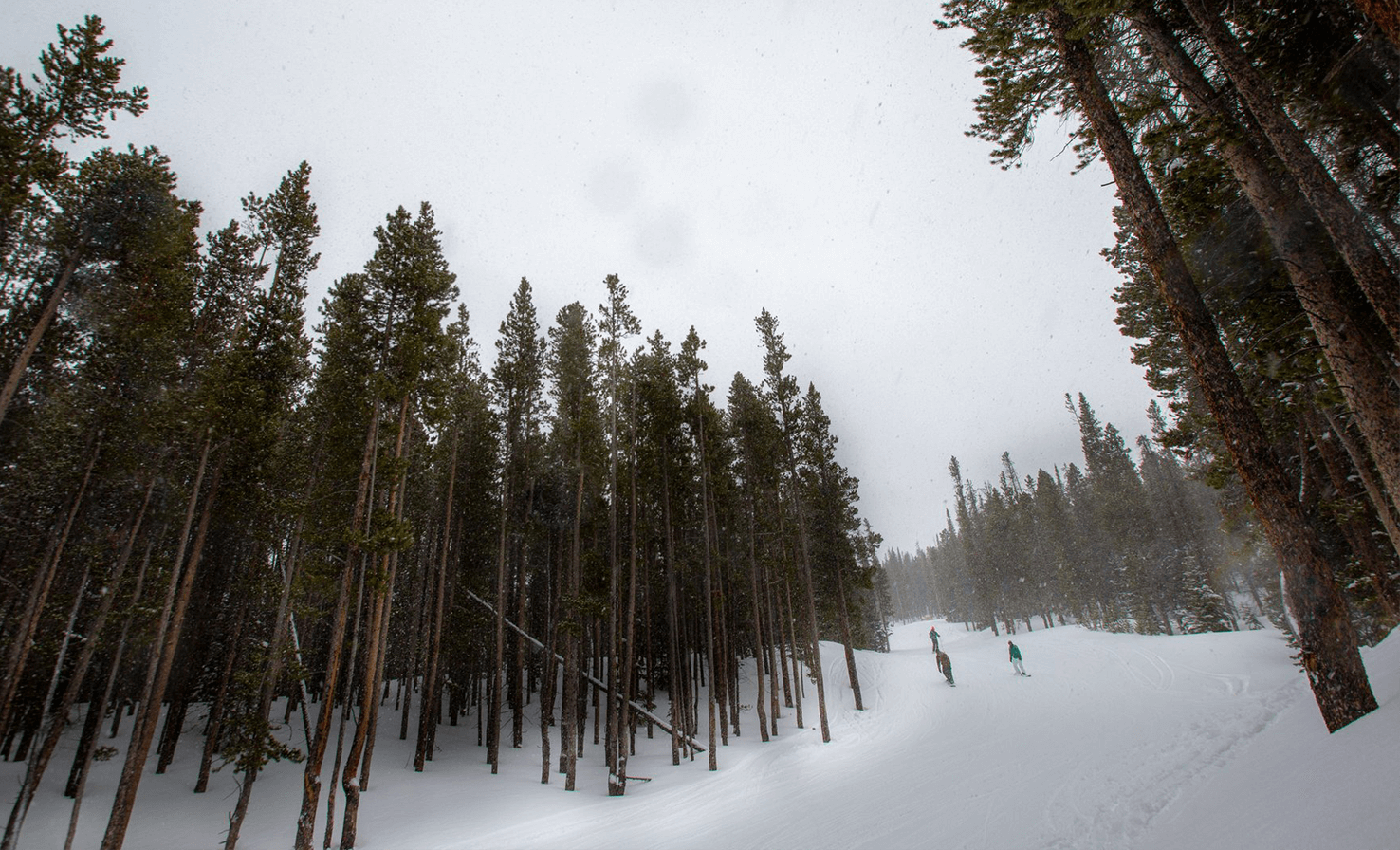 downhill skiiers traversing path