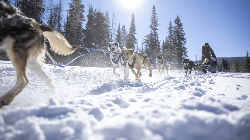dogs pulling dogsled