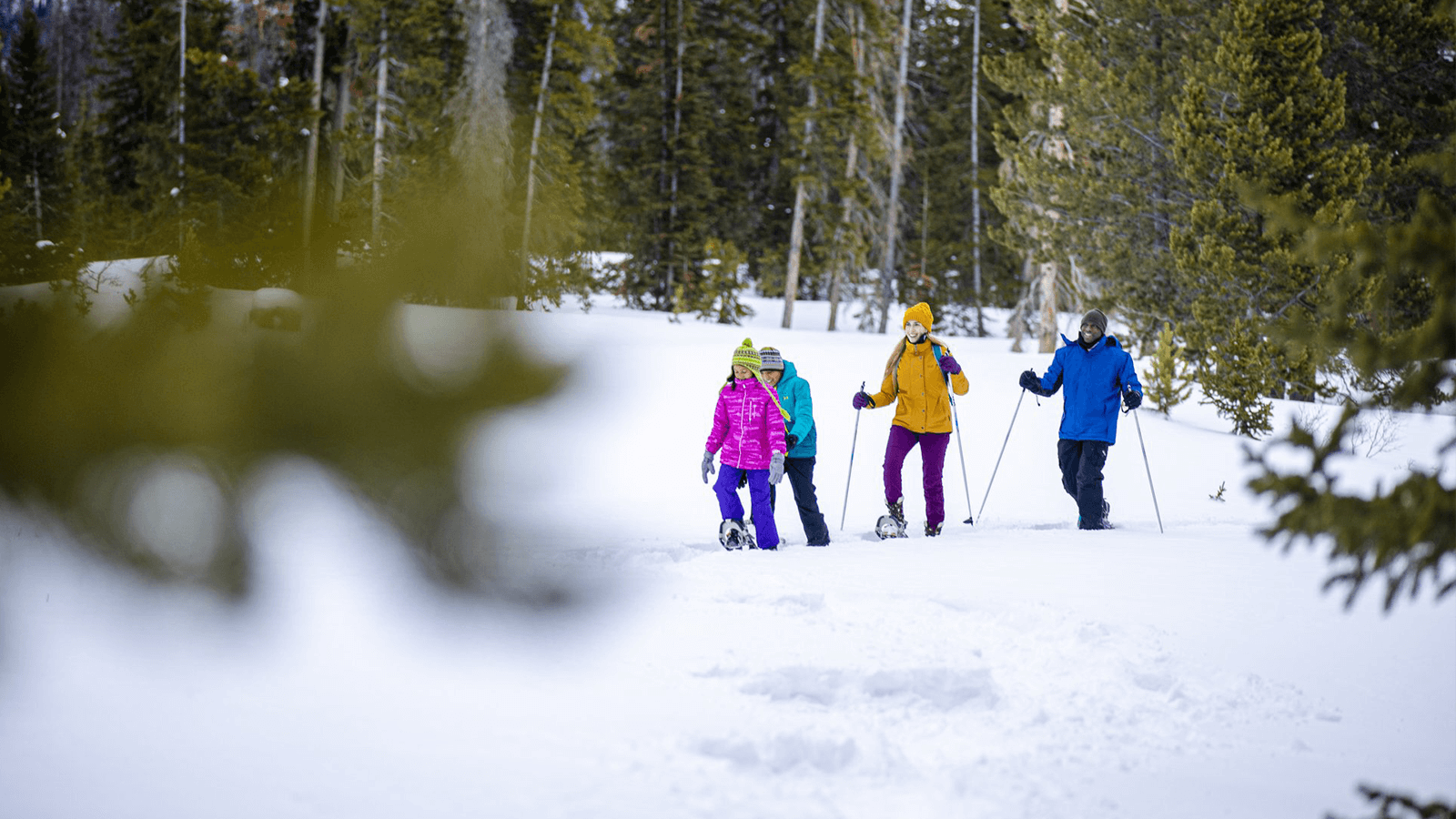 Family out snowshoeing through the trees.