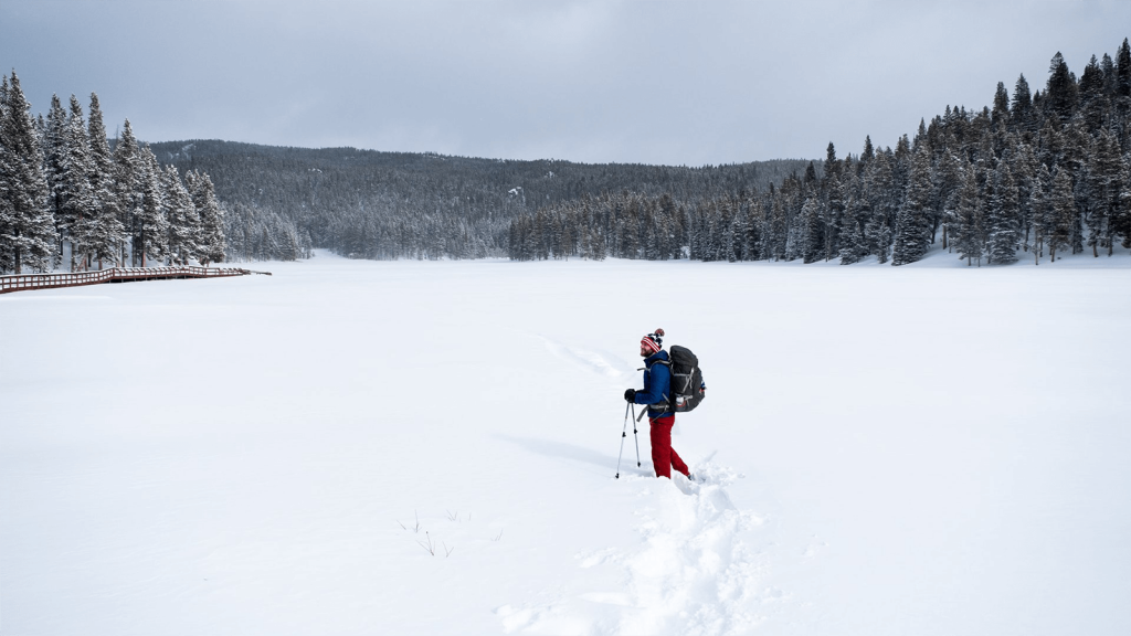 nordic skiier in snowy field surrounded by trees