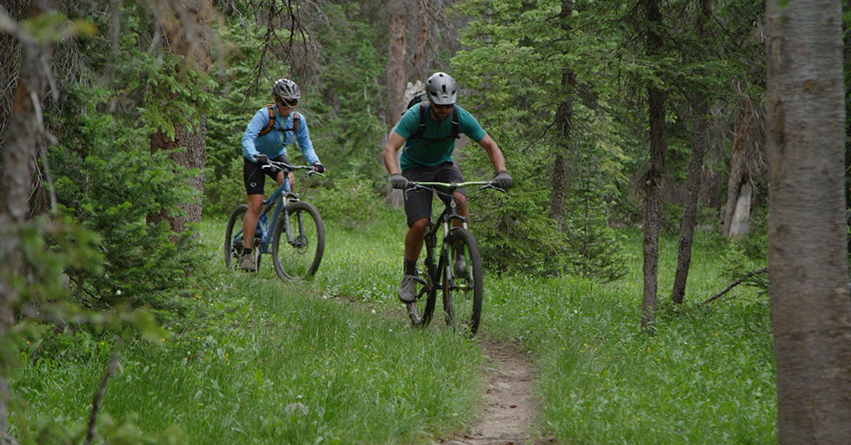 Mountain bikers on a trail through the woods.