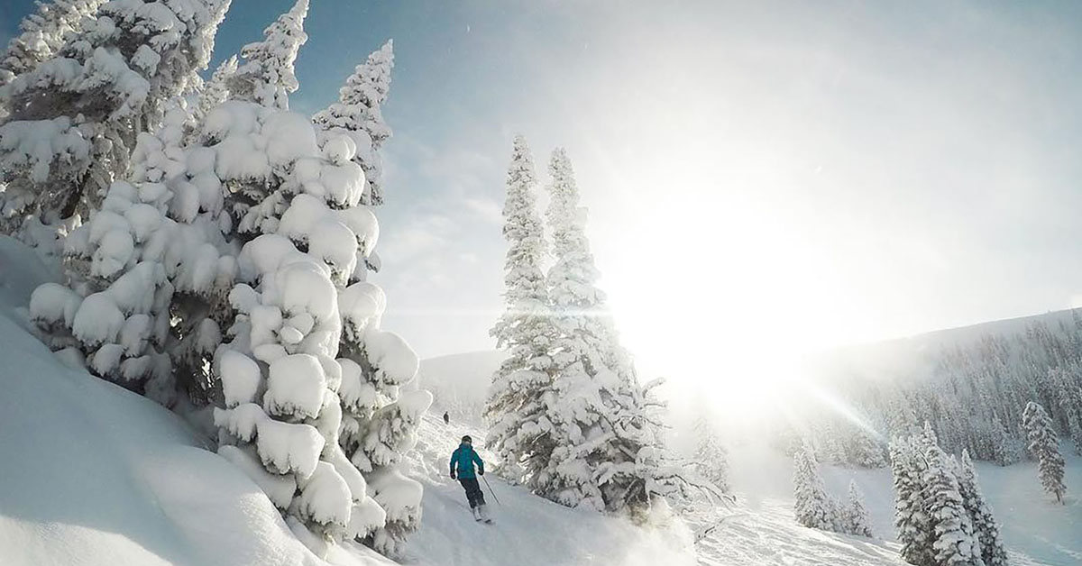Skier going through snow covered trees.